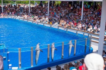 show-delfines-0