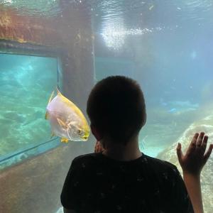 Photo - «Ningún Niño Sin Terapia» visita Marineland Mallorca