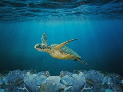 Photo - Proteger el mar balear, en manos de todos